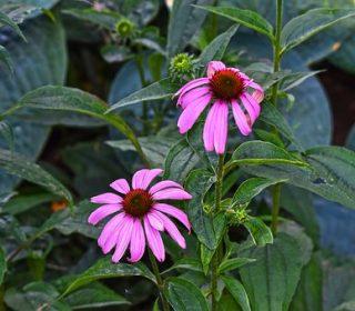 Raffreddore e influenza , rimedi naturali