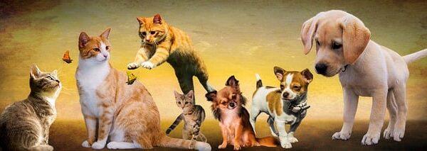 Benessere degli animali: Nuova proposta di legge.